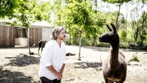 Lama die wereld kan helpen tegen coronavirus krijgt thuis in Labiomista