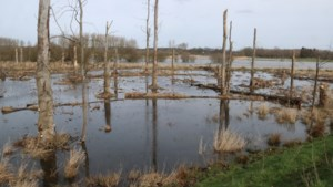 Code oranje in bos- en natuurgebieden op grens met Limburg