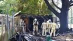 Tuinhuis in lichterlaaie paar uur nadat in buurt haarden processierups werden weggebrand