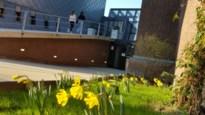 Cultuurcentrum De Bogaard vanaf 2 juni studieruimte  voor Truiense jongeren in de blok