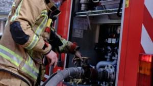 Nachtelijke brandgeur in Maasmechelen blijkt smeulende brand in bosbodem