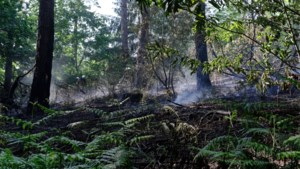 Extreem brandgevaar in natuur en bos door extreme droogte