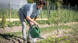 Help, mijn tuin droogt uit. Onze tuinspecialist geeft vijf tips om je tuin gezond te houden
