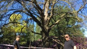 Mooiste boom van kasteelpark is dood