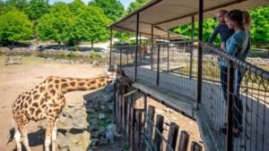 DOEN. Terug naar de zoo: aapjes kijken met een mondmasker in Pakawi Park