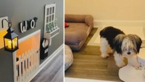 Man bouwt luxe-schuilplaats voor zijn honden onder de trap