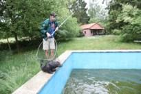 Drie bevers sukkelen in zwembad