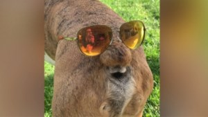 Hilarische beelden: deze hond heeft twee gezichten