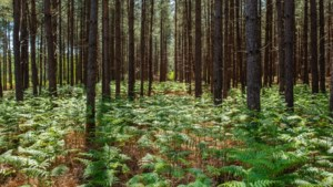 """Groen: """"Vlaanderen kapt nog steeds illegaal bomen"""""""