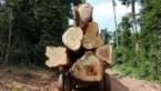 Elke zes seconden verdween vorig jaar een voetbalveld aan tropisch oerbos