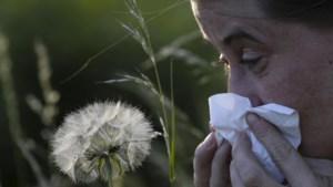 Nooit zoveel pollen in de lucht: zelfs lichte hooikoortslijder heeft nu veel last