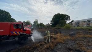 Halve hectare vegetatie afgebrand, tuinen net op tijd gevrijwaard