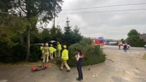 Automobilist rijdt in struikgewas van voortuin in Kortessem
