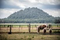 Zeldzame diersoorten krijgen meer kansen op mijnterrein Zwarte Berg