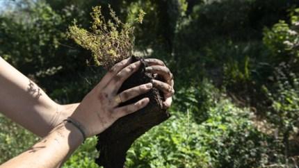 Belgen besteden jaarlijks in totaal 3,6 miljard euro aan tuin