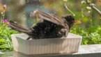 Deze tips maken de extreme hitte ook voor de beestjes in de tuin draaglijk