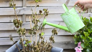 Zes tips om te tuinieren in tijden van droogte: bloot is niet de bedoeling