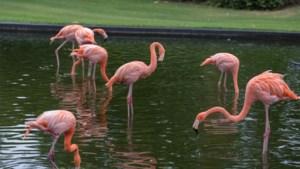 Tot 24 banen bedreigd in Antwerpse Zoo en Planckendael door coronacrisis
