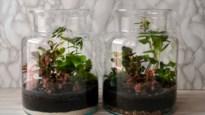 DIY. Een plantenterrarium is een musthave in huis: zo maak je er zelf eentje