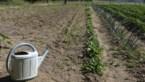 """Greenpeace België: """"Vlaanderen is even droog als Zuid-Spanje"""""""