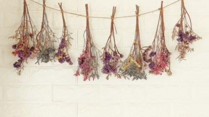 Van lavendel tot klaprozen: zo drogen zelfgeplukte bloemen mooi op