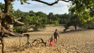 Kortbijtip van de Goesting redactie: picknick op de Oudsberg