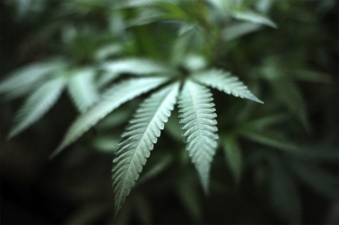 Genkenaar aangehouden voor drugsdealen na vier huiszoekingen