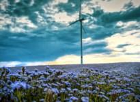 Europees Hof torpedeert Vlaamse milieuregels voor windturbines en eist onderzoek