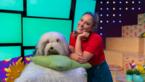"""'Samson & Marie' krijgen eigen tv-reeks: """"Mensen reageerden positief"""""""