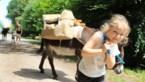 <B></B>DOEN. Op pad met twee koppige ezels in de Limburgse natuur