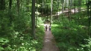 Gemeenten moeten gemiddeld 2,5 hectare meer bos aanleggen