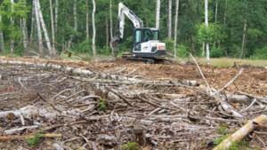 Tot 1.000 hectare fijnsparren ten dode opgeschreven