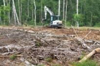 Tot 1.000 hectare bos verdwenen: Bosgroep lanceert Eerste Hulp Bij Afgestorven fijnsparren