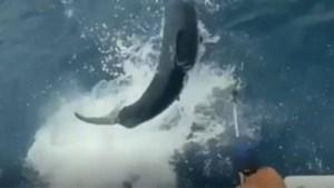 Visser heeft beet, maar dat trekt plots de aandacht van een nieuwsgierige haai