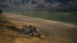 Resten van schildpad van 11 miljoen jaar geleden aangetroffen in Duitsland