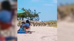 Strandgangers geloven ogen niet wanneer een leger ganzen het strand op marcheert
