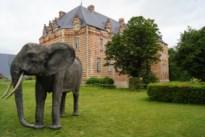 Wilde dieren gespot in kasteelpark