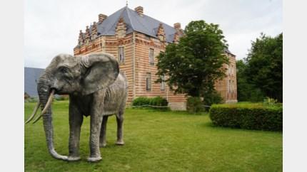 Wilde dieren gespot in kasteelpark van Heers