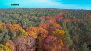Nationaal Park Hoge Kempen werft nieuwe rangers aan