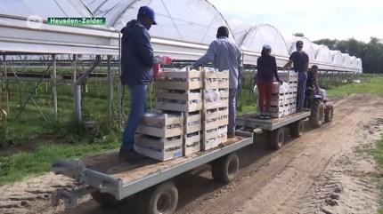 Fruitteler wil seizoensarbeiders langer aan het werk om heropflakkering corona te voorkomen