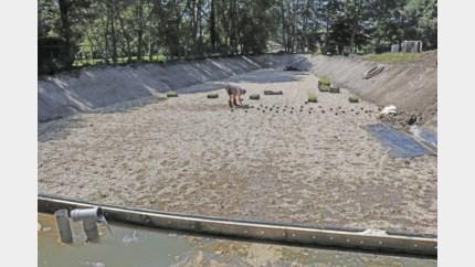 Nieuw rietveld voor betere waterkwaliteit Warmbeek