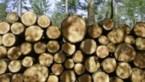 """""""Vlaanderen kapt 21 procent minder bomen dan in 2016"""""""