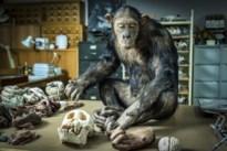 Bioloog UHasselt op zoek naar gastheer van corona in… musea