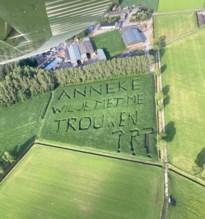 """Verborgen huwelijksaanzoek in maïsveld net over de grens met Achel: """"Ze heeft 'ja' gezegd"""""""