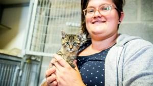 Kitten 'Ozzie' uit rijdende auto gegooid in Pelt: asiel start actie voor dure operatie
