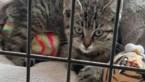 Giften voor uit auto gegooide kitten Ozzie beginnen binnen te komen
