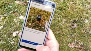 Databank met wilde planten- en dierensoorten groeit fors door app