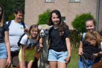 Riemstse jongeren op stap met alpaca's