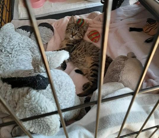 """""""Meer dan genoeg centjes voor operatie van kitten Ozzie die uit auto werd gegooid"""""""