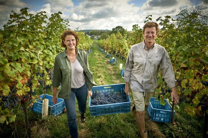 """Het eerste biodynamisch wijndomein in ons land: """"Een droom is werkelijkheid geworden"""""""